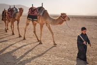 Boy and Camels in Tadmorean Desert