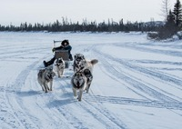 Dog sled around Kuujjuaq, Canada