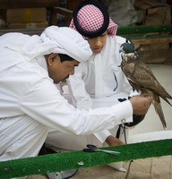Falcon Vendors in Souq Waqif in Doha, Qatar