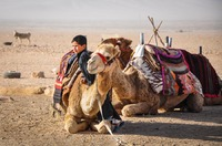 Bedouin boy in Tadmorean Desert II