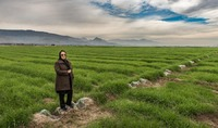 Dynamic Entrpreneur in Her Wheat Fields in Daras, Iran