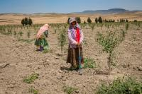More drought resistant crops are needed due to the reduced precipitation in Tunisia and elsewhere in the Maghreb.