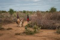 The Omo Valley is getting dryer due to climate and other changes. The hot and dry summers force boys walk further to find grass for their goats in Ethiopia and beyond.