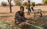 The reduced amount or lack of water for irrigation of crops has made some women collect reeds for making brooms to sell in Turkana, Kenya.