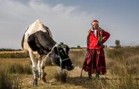 The Berber women in Tunisia have to walk further with their livestock to find feeding areas during the recurrent droughts.