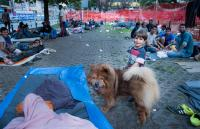 Refugee boy and a local dog in Belgrade, Serbia.