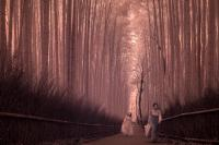 The bamboo Grove in Arashiyama, Japan (Infrared Photography)