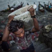 Worker Offloads Fish in Rakhine State, Myanmar