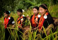 Naga Women in a Rice Field in the Mountains, Myanmar